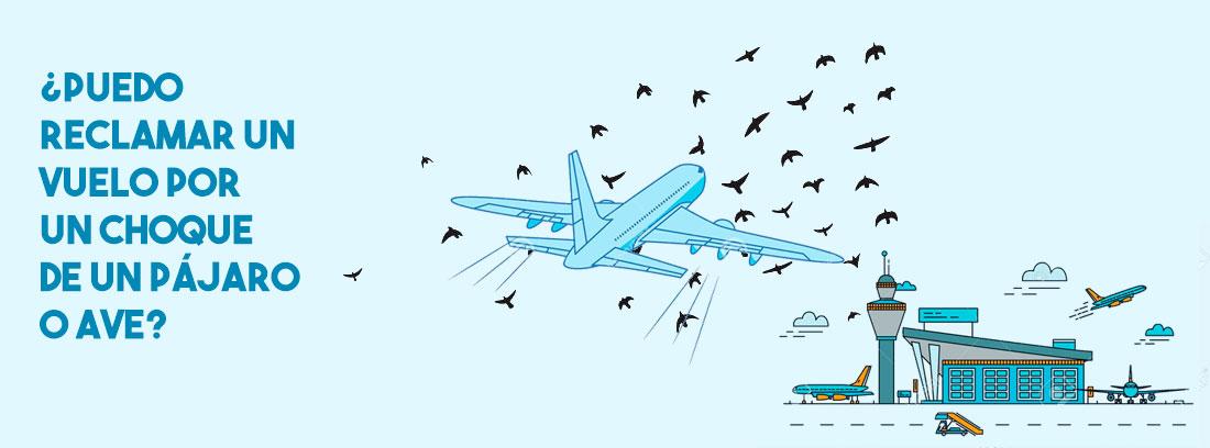 Reclamar un vuelo por un choque de un pájaro o ave